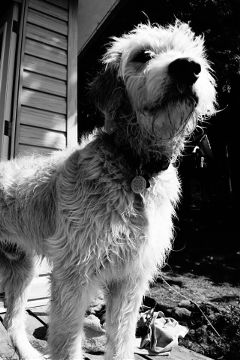 mypet summer photography pets & animals black & white