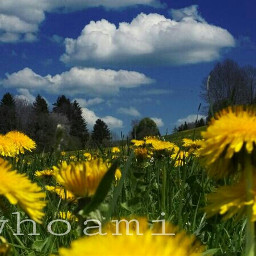 clouds flower emotions nature photography