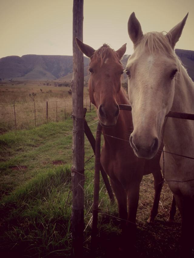 a friend in need is a friend in need #farm #horses #mypet's