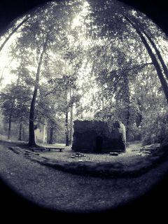 ruin forest black & white fisheye trees