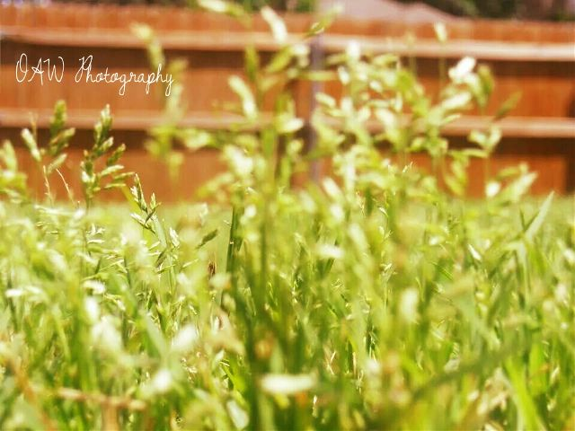pictures of grass