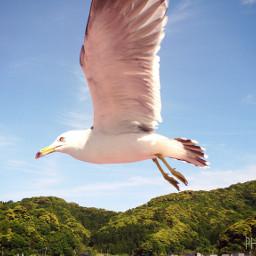 japan photography travel bird pets & animals