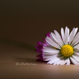 canon nature flower colorful minimal