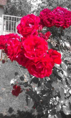 beautiful flower emotions nature photography