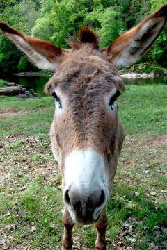 pets & animals nature photography selfie