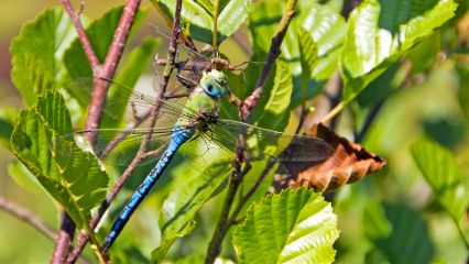 dragonfly nature colorful photography closeup