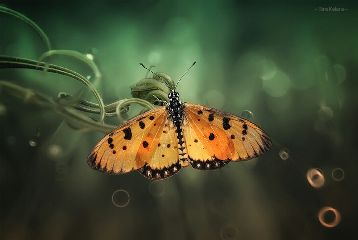 colorful indonesia pets & animals photography macrography