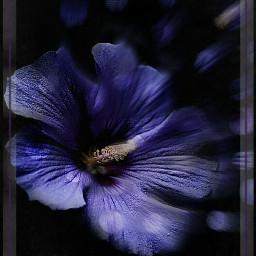 blur flower nature photography art