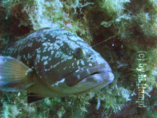 fish underwater mhnec nature diving