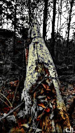 earthphoto photography nature colorsplash