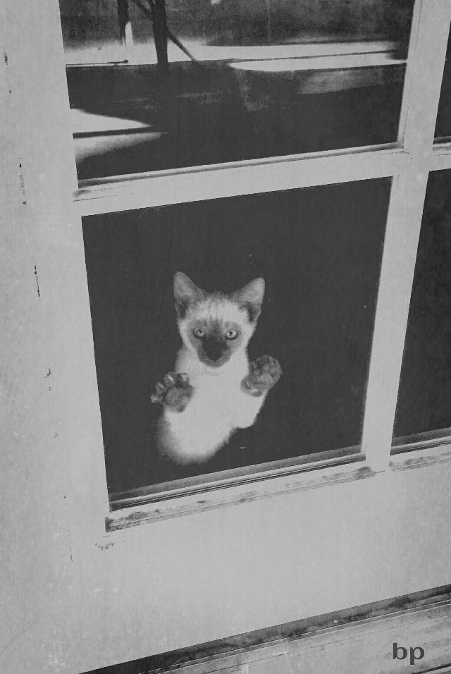 picstures of windows