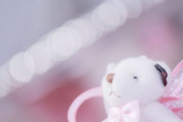 bear photography cute japan