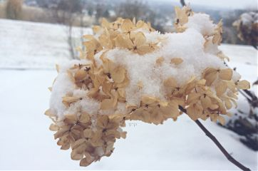 snow nature winter