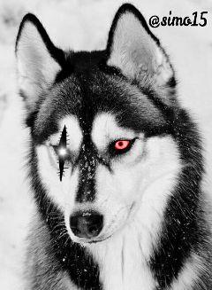 eyes freetoedit snow blackandwhite winter