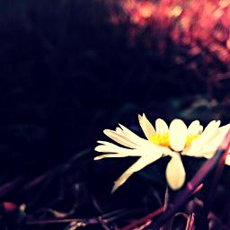 nature flower colorsplash spring